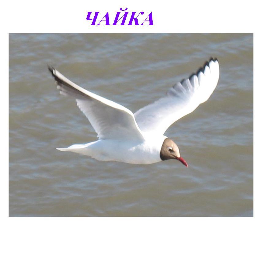 Птица чайка своими руками 99